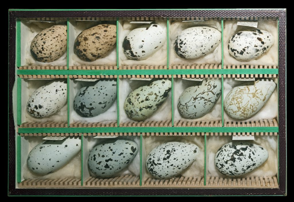 https://en.wikipedia.org/wiki/Egg#Fish_and_amphibian_eggs