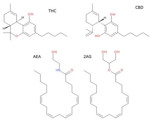 THC molecules