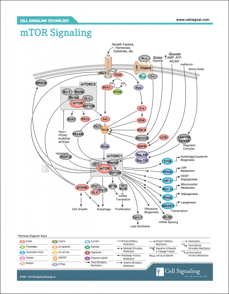 Retrieved from http://www.cellsignal.com/contents/science-pathway-research-pi3k-akt-signaling-resources/mtor-signaling-pathway/pathways-mtor-signaling