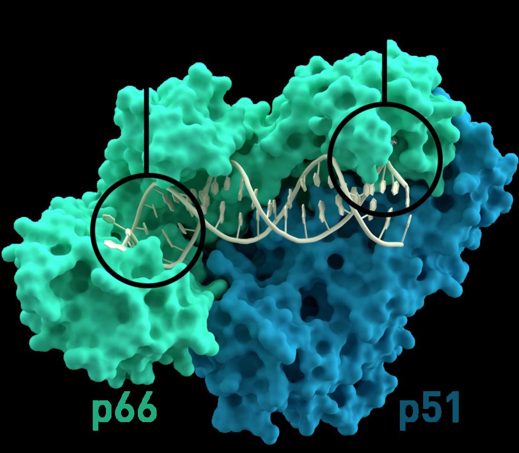 reverse-transcriptase