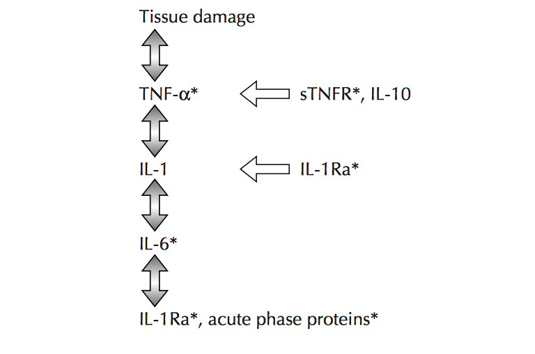 Inflammaging: The Disease of the Elderly – BIOL312 @UNBC – Molecular